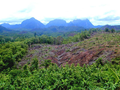 Linking global REDD policies with local reality