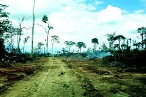 Remains of a Brazilian forest after deforesting