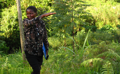 Agroforestry as a climate change solution: This small timber farm in Uganda can play a crucial role in the fight against climate change by storing carbon, while also providing income and other benefits to farmers. Photo: V. Meadu, ASB.