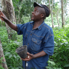 Farmer in Cameroon explaining latex tapping. ICRAF and TMP are working on a project to understand how public and private financial investors can be encouraged to provide capital for sustainable land use practices