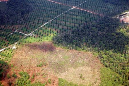 A landscape in Sumatra, Indonesia clearly shows a mosaic of forest, oil palm and clearcut areas. A whole-landscape approach accounts for carbon in all of these areas.