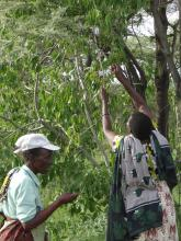 The Ngitili system in Shinyanga Tanzania a model on synergies between climate change adaptation and mitigation