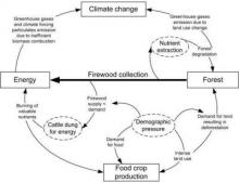 Fig 1: System interactions in the Menagesha Suba area focusing on the links between forest, energy needs, food crop production and climate change (Duguma et al. 2014)