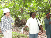 A field extension officer (middle) explains cacao agroforestry farming methods in Cameroon. Findings of a new study show that in developing countries, institutional setup is an area with strong potential for synergy between mitigation and adaptation