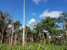 Are claims on zero deforestation valid or just that -Claims